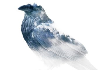 raven-image